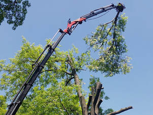 Tree crane cutting branch in process of tree removal, Peoria, Illinois